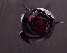 Black Red Rose On Black Background