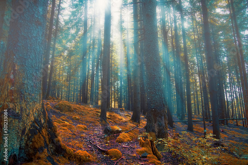 Foto auf Leinwand Rosa dunkel Enchanted forest