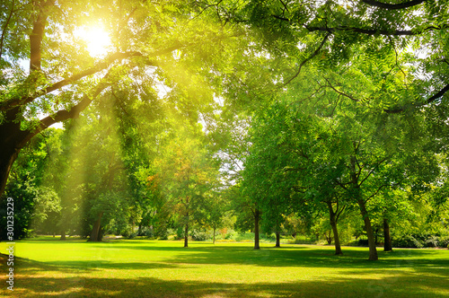 Obraz Sunrise beam in the beautiful park. - fototapety do salonu