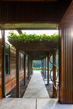 Grape Arbor On Building