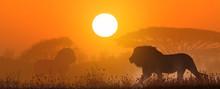 African Landscape At Sunset Wi...