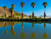 Beautiful Reflection Of Palm T...