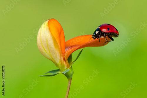 Spoed Fotobehang Vlinder Beautiful ladybug on leaf defocused background