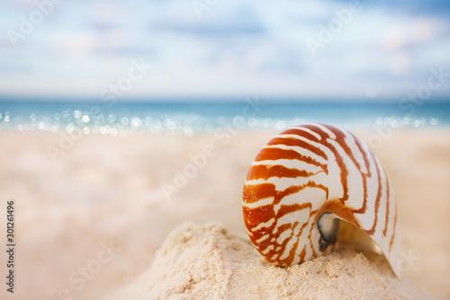 Valokuva nautilus sea shell on golden sand beach in  soft sunset light