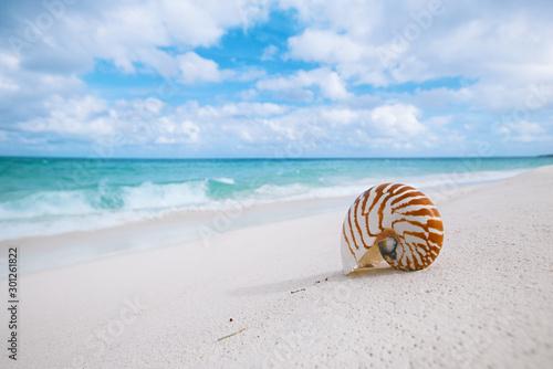 Obraz na plátně  nautilus shell on white beach sand, against sea waves