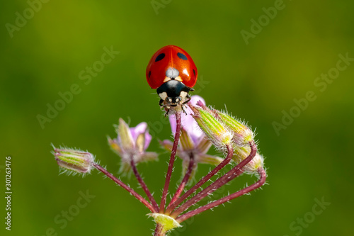Tuinposter Vlinder Beautiful ladybug on leaf defocused background