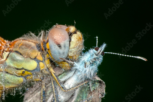 Fotobehang Vlinder Showing of eyes dragonfly and wings detail. Beautiful dragonfly in the nature habitat