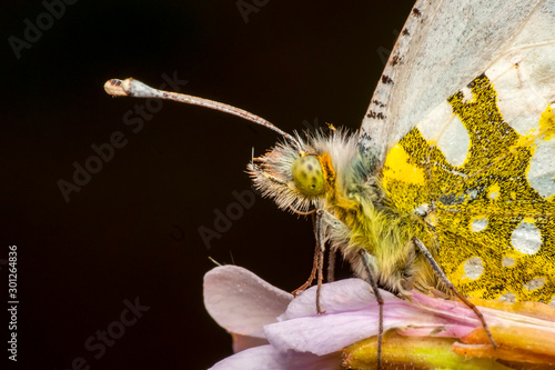 Fotobehang Vlinder Beautiful butterfly sitting on flower in a summer garden
