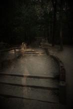 Vertical Dark Shot Of A Long P...