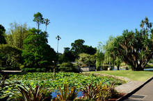 A View In The Royal Botanic Gardens In Sydney, Australia.
