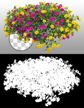 Cut Out Flowers. Colorful Flowers Isolated On Transparent Background Via An Alpha Channel. Hanging Flowers Basket. Flower Bed For Garden Design Or Landscaping. High Quality Clipping Mask