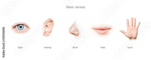 Foto five senses concept