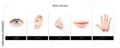 five senses concept Fototapete