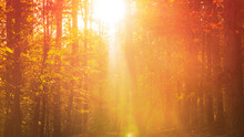 A Scenic Autumn View Of Sunlight Shining Through A Forest Canopy.