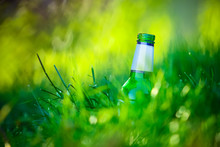 Green Bottle In Deep Grass.