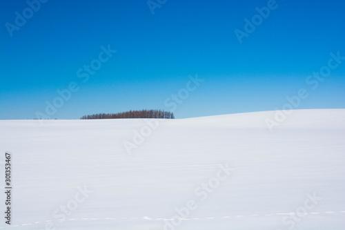Fényképezés 雪原とカラマツ林と青空