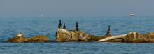 Cormorants On Rock In The Sea
