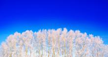 Frozen Branch Of A Tree In A B...