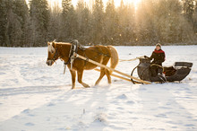 Woman And Horse With Sleigh In...