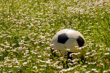 Ball On The Flowers Of Daisies