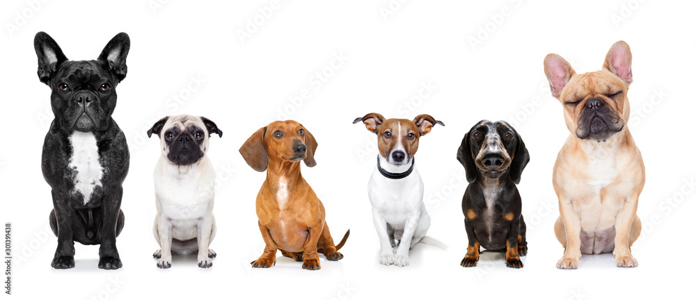 Fototapety, obrazy: homeless row of dogs to adopt