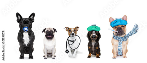 fototapeta na drzwi i meble medical doctor sick ill dogs