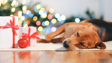Adorable Dog With Gifts Celebr...