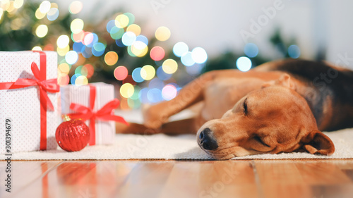Foto  Adorable dog with gifts celebrating Christmas at home.
