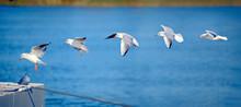 Touchdown Of A Seagull