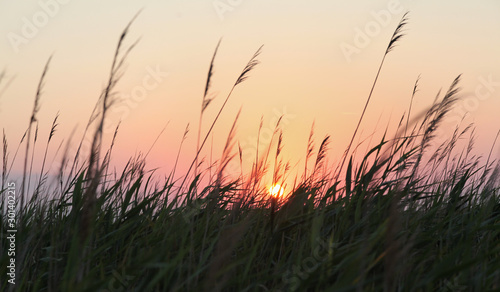 Obraz na plátně Beautiful view of the summer sunset on the lake overgrown with reeds