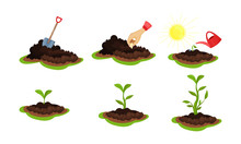 Stages Of Life Cycle Of Plant Growing By Man Vector Illustration