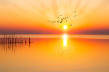 Atardecer Sobre El Lagos Con Aves Volando Hacia El Sol