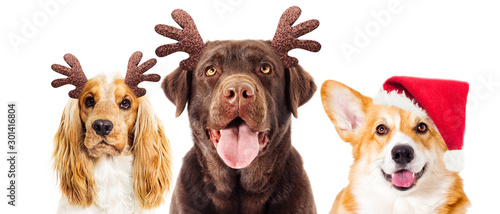 fototapeta na ścianę dog and New Year's deer horns