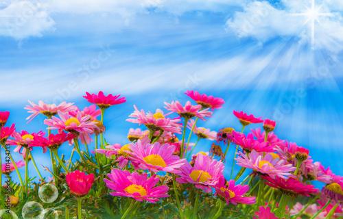 Fotografie, Obraz  paisaje de unas flores naturales en el campo