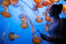 Woman Watching Exotic Jellyfishes In An Aquarium