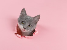 The Kitten Is Looking Through ...