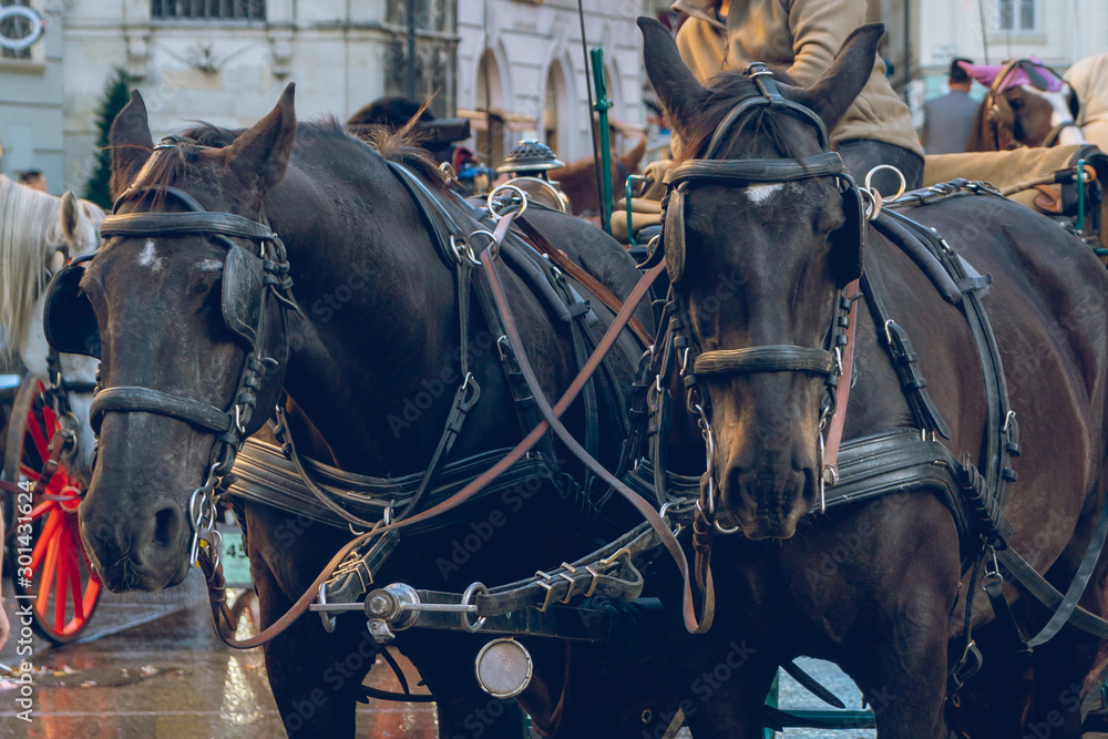 Fototapety, obrazy: Horse-drawn carriage or Fiaker, popular tourist attraction, on Michaelerplatz in Vienna, Austria.