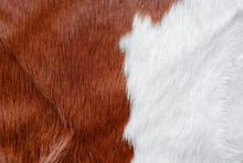 Fur Cow Leather Texture Backgr...