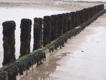 Wooden Posts Covered In Seaweed