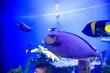 canvas print picture - tropical sea fish