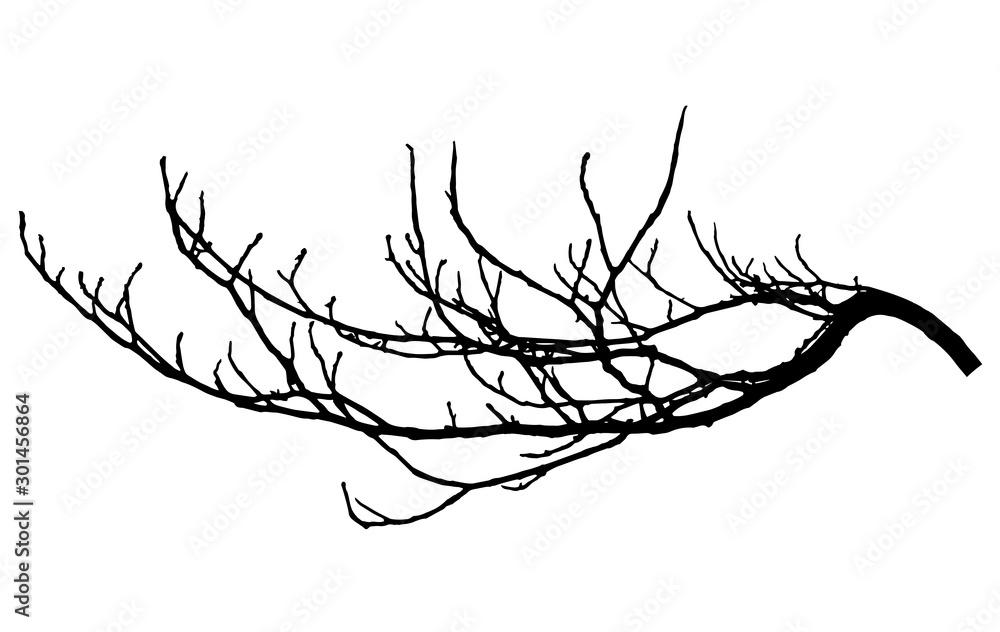 Fototapeta Chestnut branch silhouette. Tree branch, vector illustration.