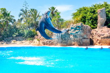 Dolphin Show In Loro Park, Tenerife, Canary Islands, Spain