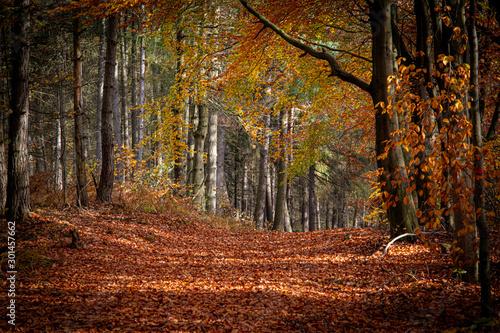 Foto auf AluDibond Violett rot Empty road in colorful autumn forest