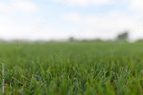 Obraz The grass pitch - fototapety do salonu