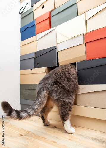 Obraz na plátne  Funny cat playing hide and seek or curious, he climbed into a pile of folded shoe boxes and only his hind legs and tail are visible