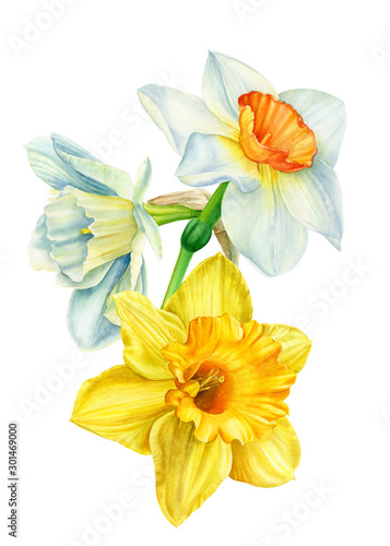 beautiful bouquet of flowers, narcissus on an isolated white background, waterco Canvas Print