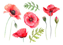 Watercolor Red Poppies. Wild Flower Set Isolated On White. Hand Painting Illustration For Interior Decoration, Textile Printing, Printed Issues, Invitation And Greeting Cards.