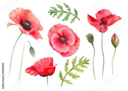 Watercolor red poppies. Wild flower set isolated on white. Hand painting illustration for interior decoration, textile printing, printed issues, invitation and greeting cards. - 301469415