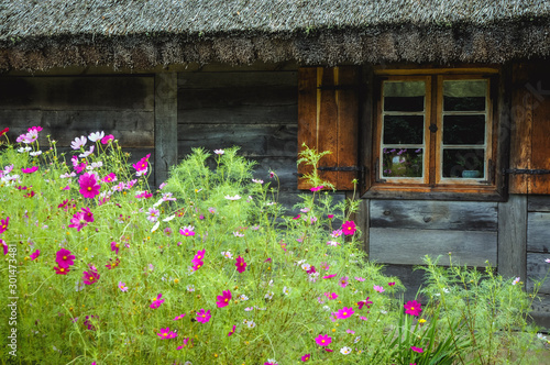 Flowers in front of old wooden cottage in Poland