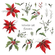 Set Of Winter Flowers (poinsettia, White Mistletoe, Holly) Isolated On A White Background. Realistic Hand-drawn Doodles, Colorful Ornaments, Decorations For Seasonal Cards, Posters, Advertising.